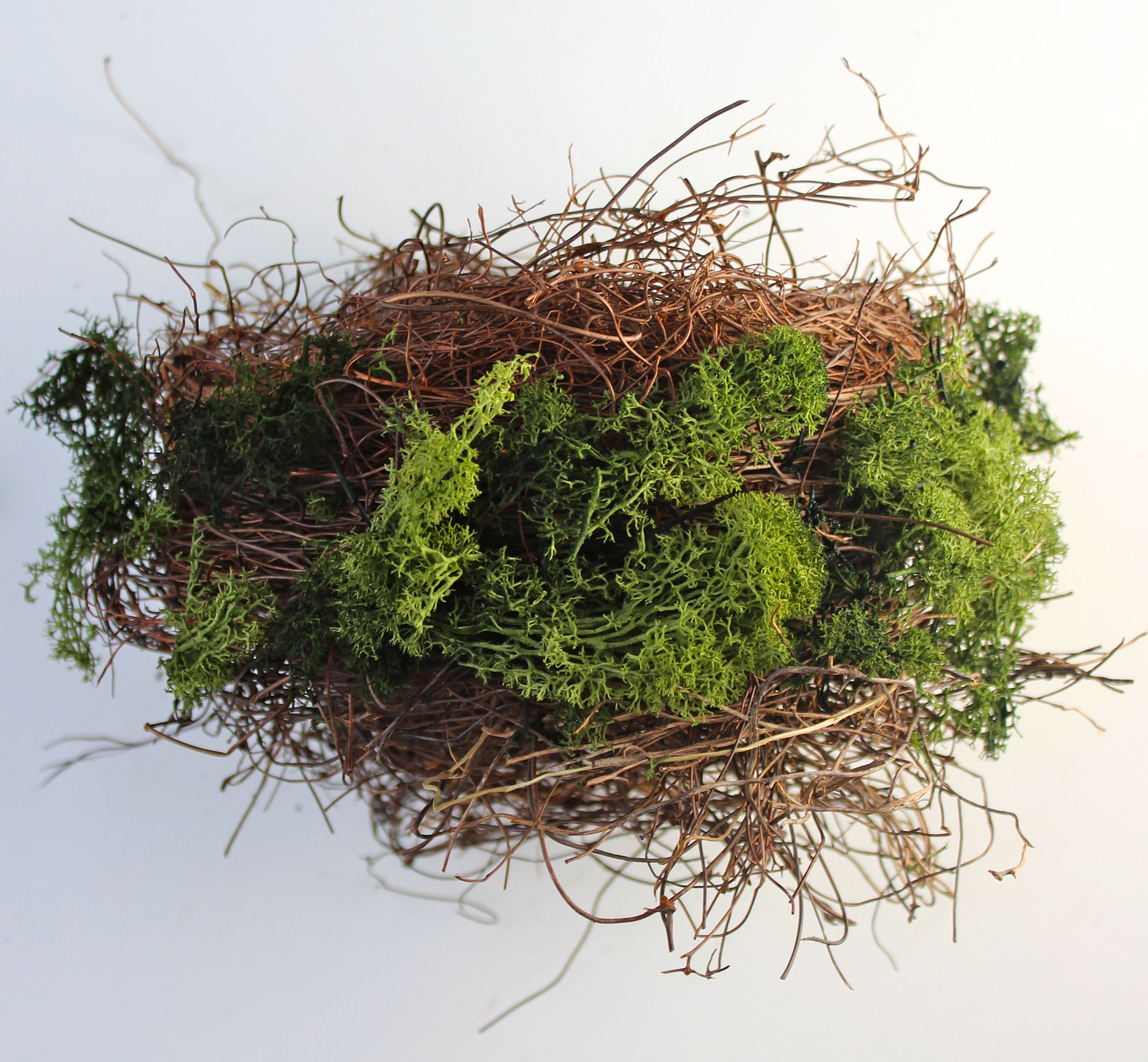 nest build step 3 moss
