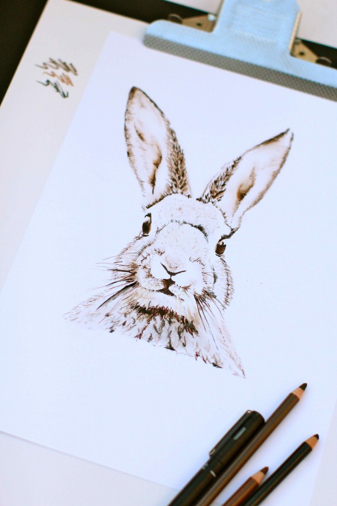 rabbit sketch in chalk pencils