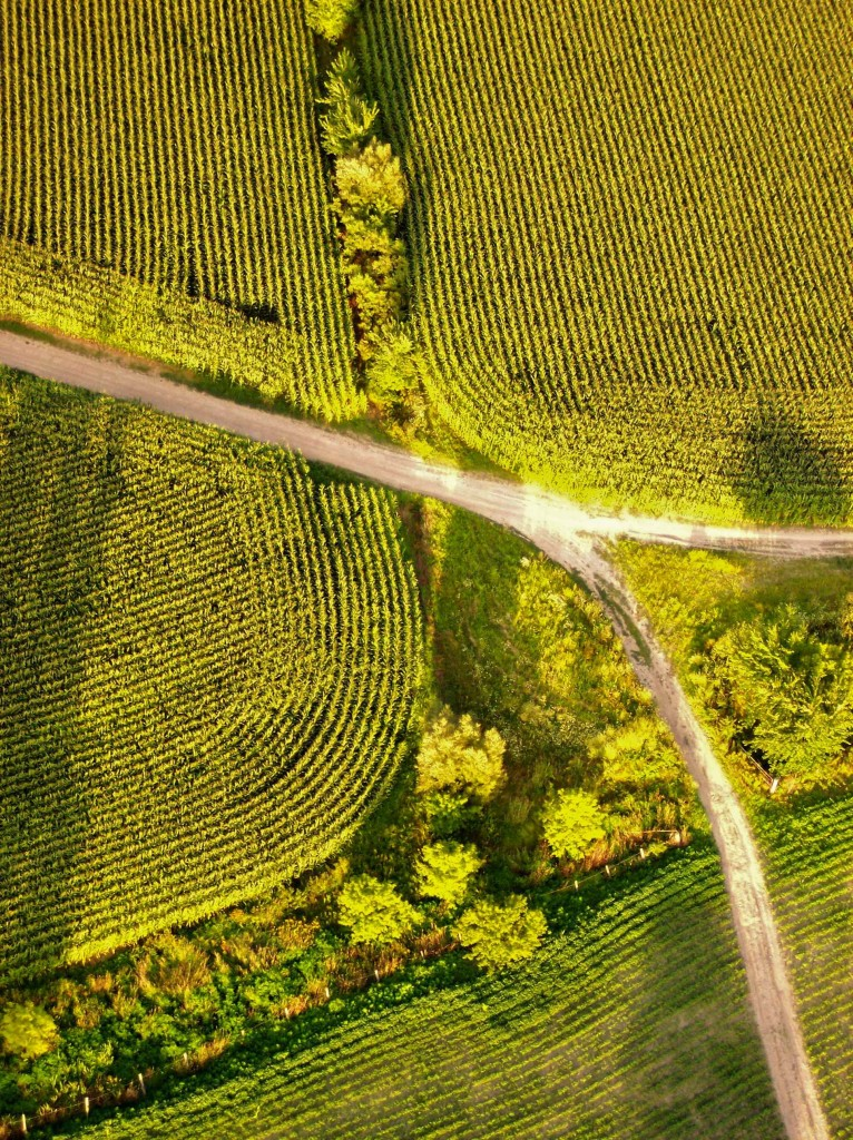 ALBUM art shot fields from the hot air balloon2