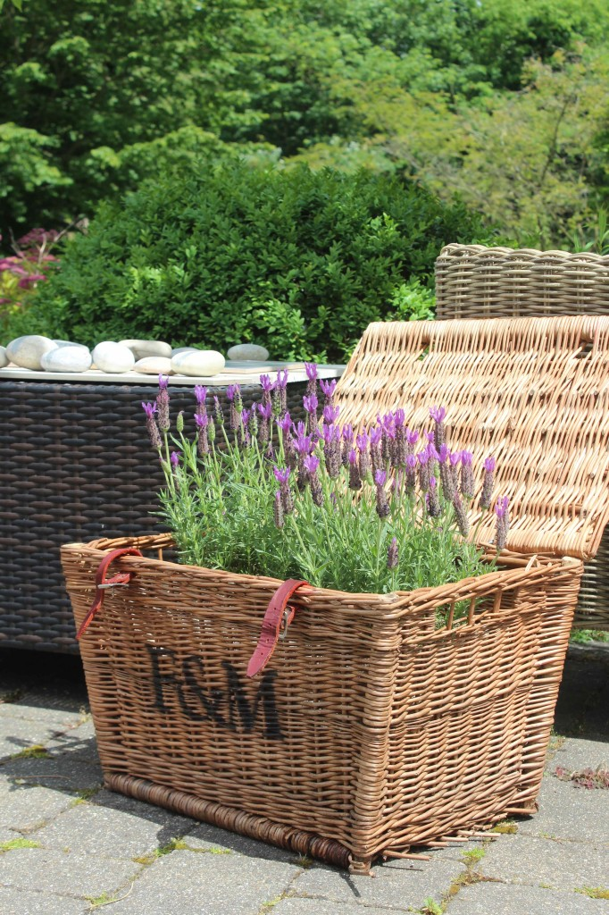Lavender basket on the terrace