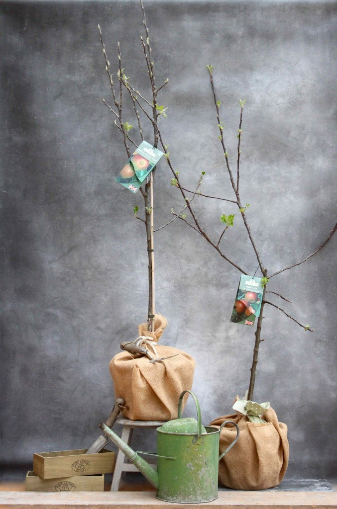 Apple trees as a Christening gift