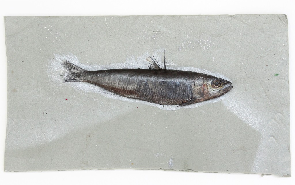 Gyotaku fish on board