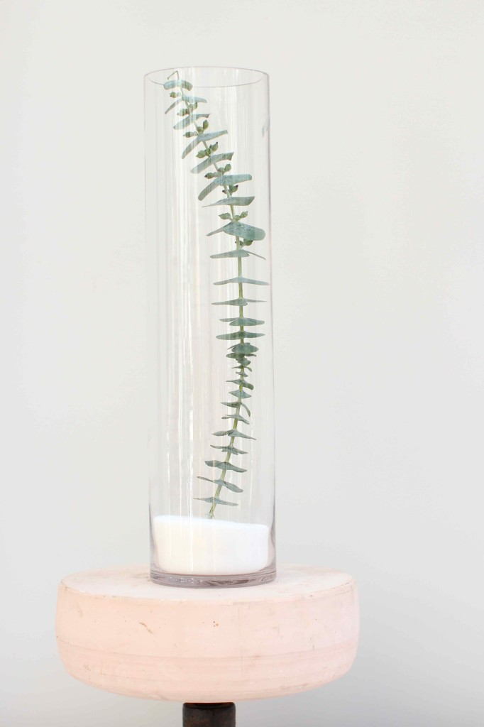 eucalyptus stem in a vase