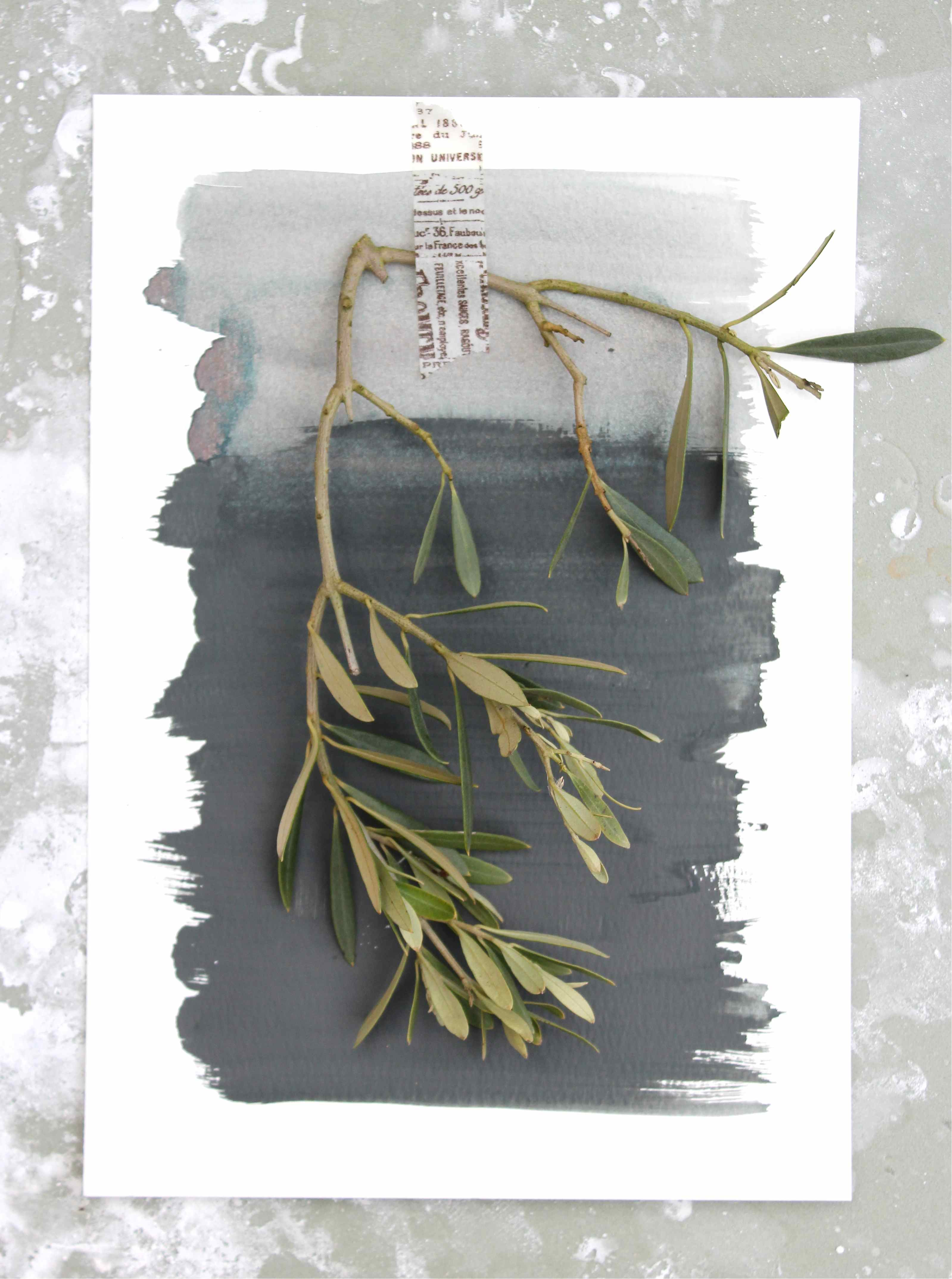 olive sprigs